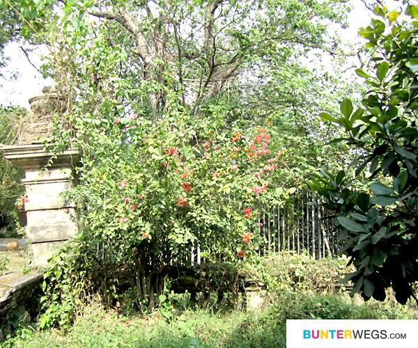 41-botanischer-garten-bunterwegs