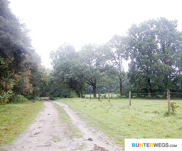 Lüneburg startet direkt abseits der Strasse * BUNTERwegs.com