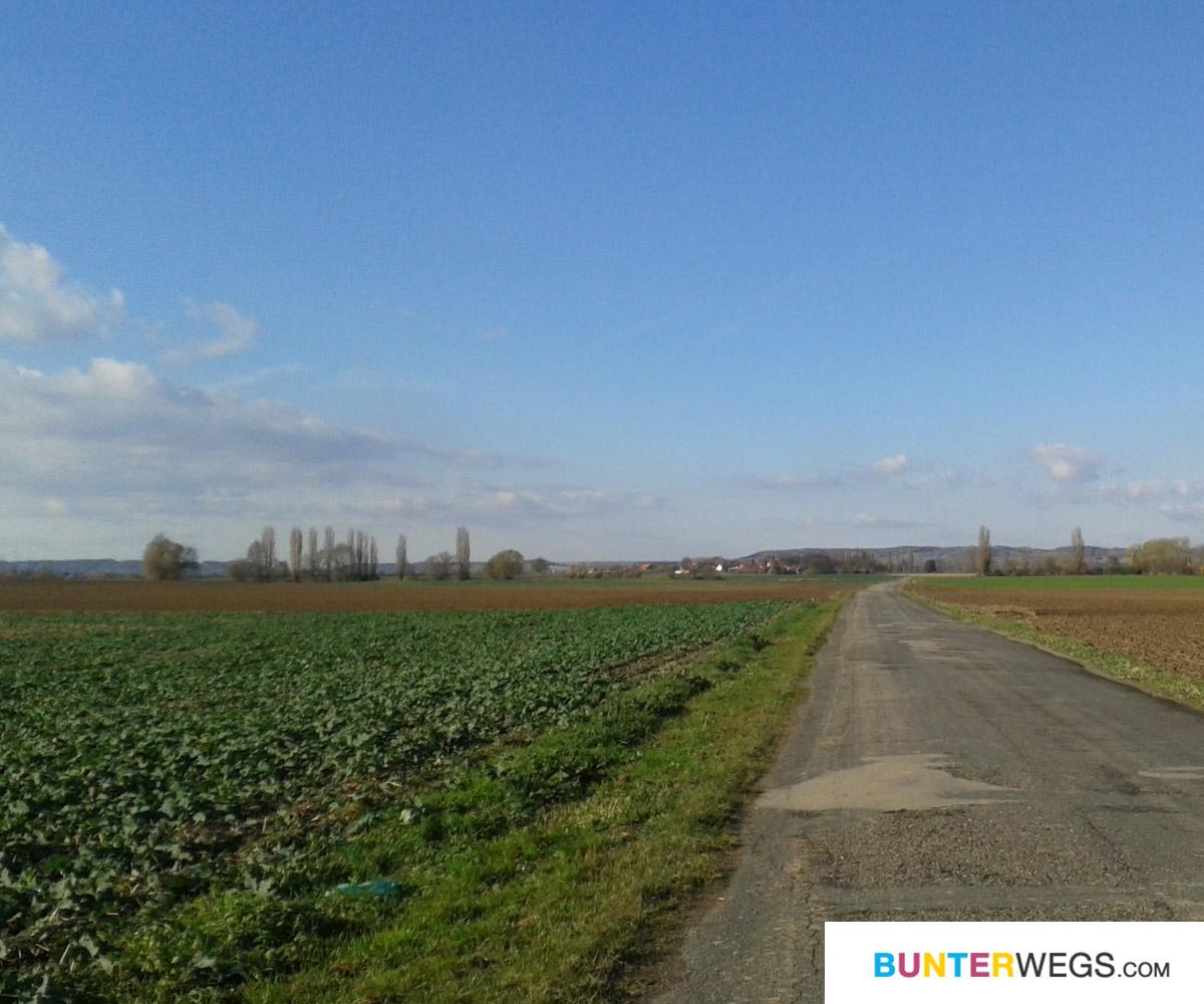 Der Elberadweg geht nicht immaer direkt am Wasser entlang ;) * BUNTERwegs