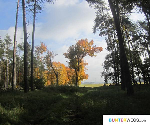 Endlich durch den Wald * BUNTERwegs.com
