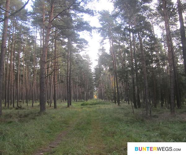 Endlich durch den Wald
