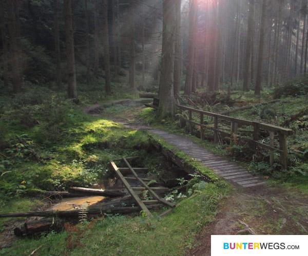 tupadly-07-Waldweg. Tschechien * BUNTERwegs.comtschechien-bunterwegs