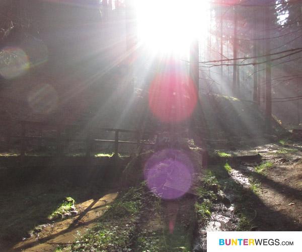 Waldweg. Tschechien * BUNTERwegs.com