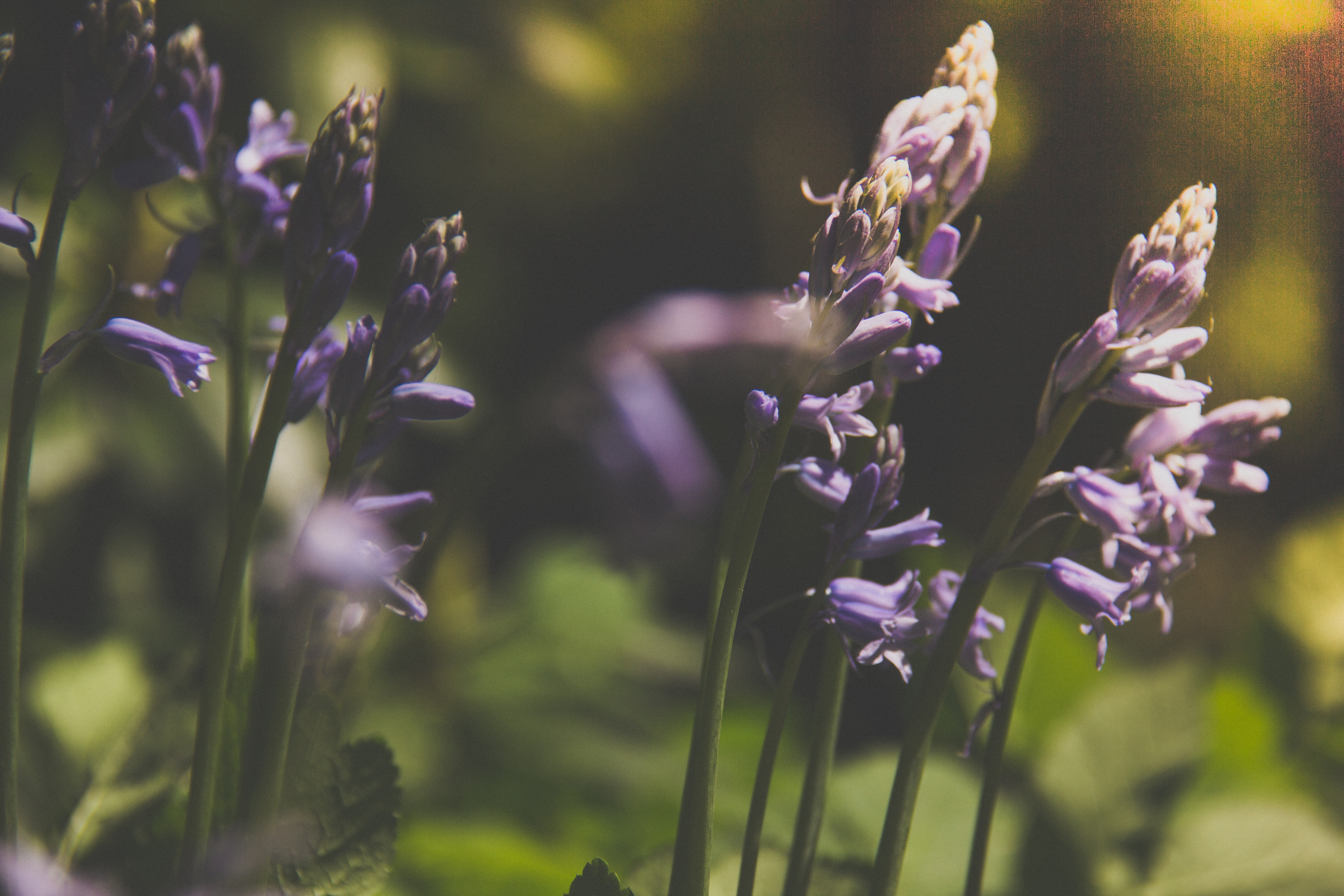 Lavender als Heilmittel * OUTDOOR