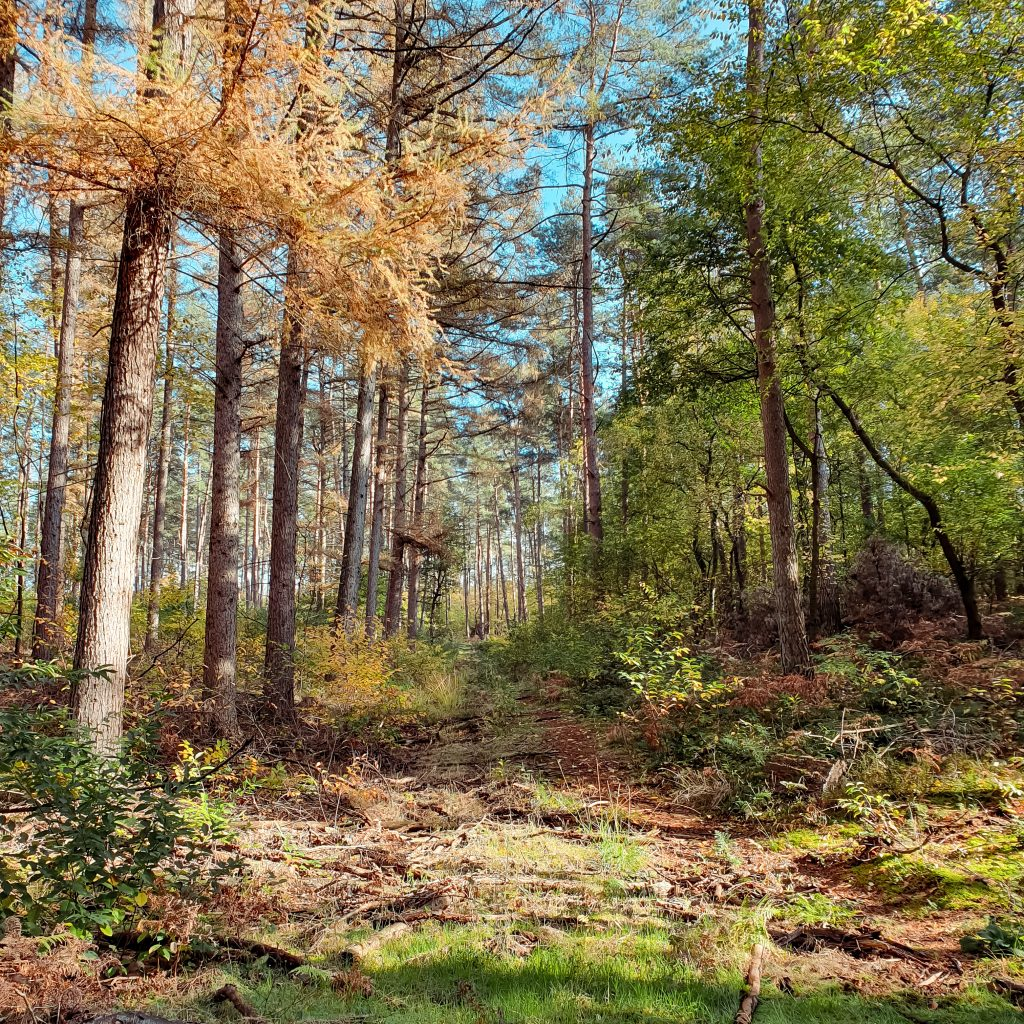Hohe Mark * BUNTERwegs. Der Outdoor Blog und Abenteuer Reise Blog mit Liebe zum Wandern